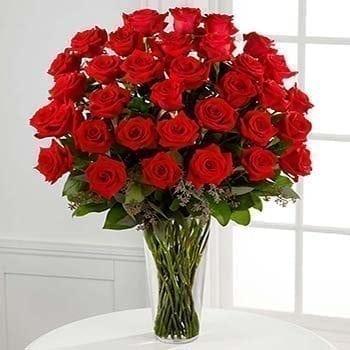 36 Luxury Red Roses - Precious Petals Florists
