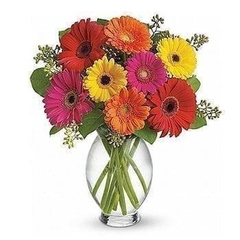 Gerbera Daisies by Precious Petals Florists