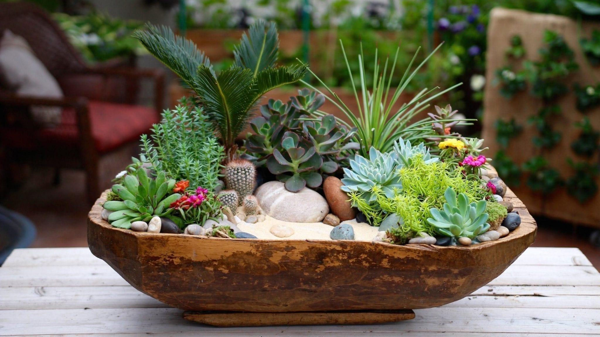Get Your Succulents & Cactus at Precious Petals Flower Shop in Dublin