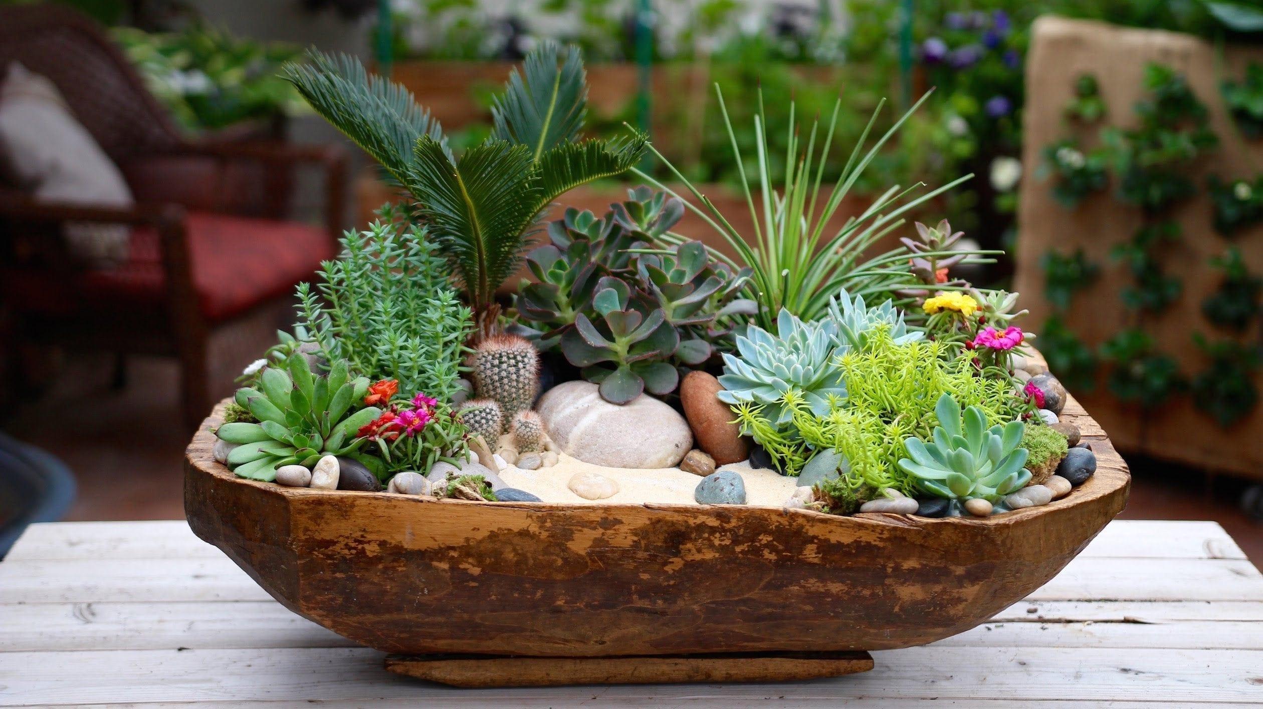 Succulents cactus flowers dublin flower delivery for Garden arrangement of plants