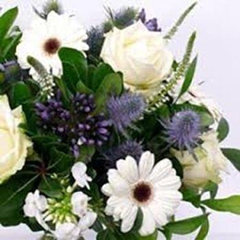Florists Choice Of The Day - Baby Boy | Precious Petals Florists