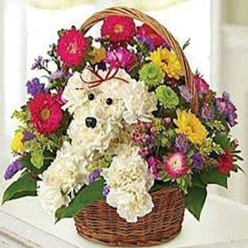A Dogs Life by Precious Petals Florists
