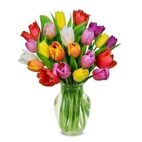 Dublin Tulips