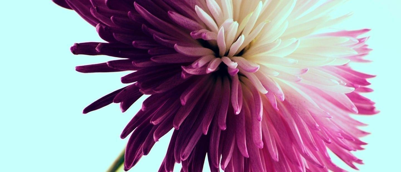 Flower Facts For Kids - Precious Petals Florists