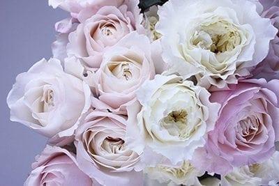 The History Of Roses - Precious Petals