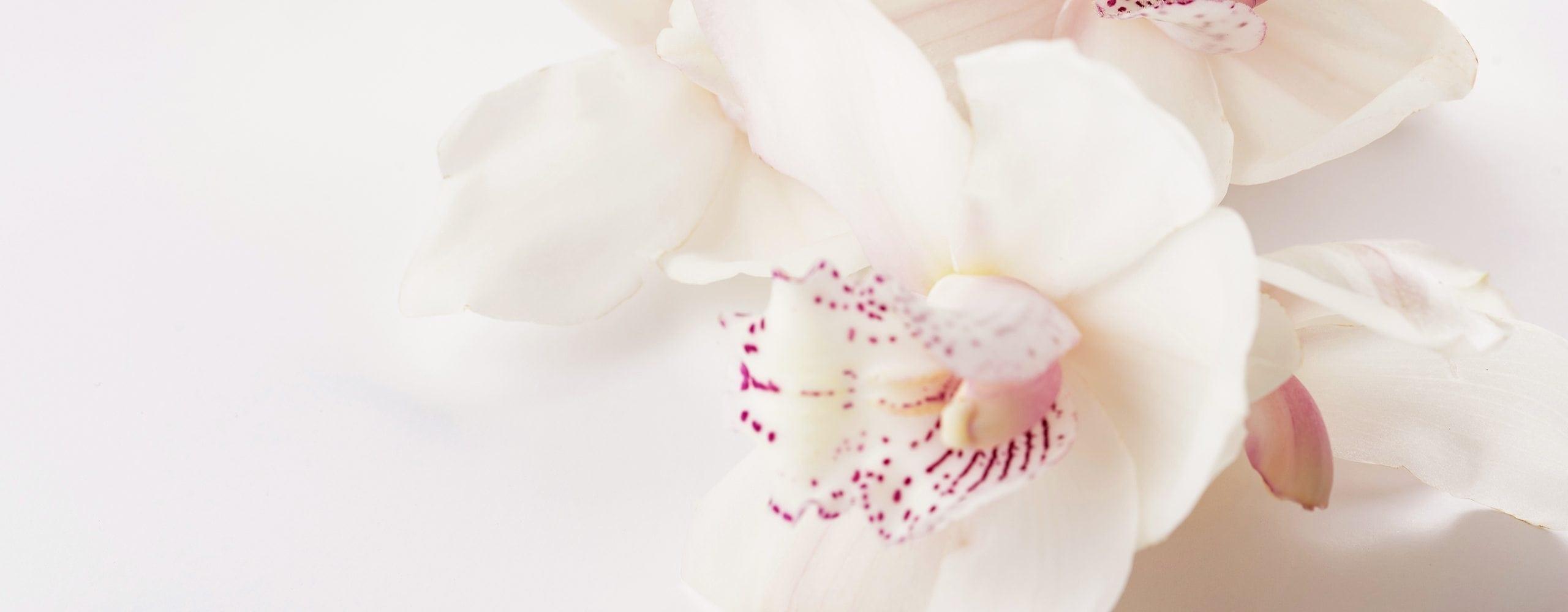 Precious Petals Florists Services