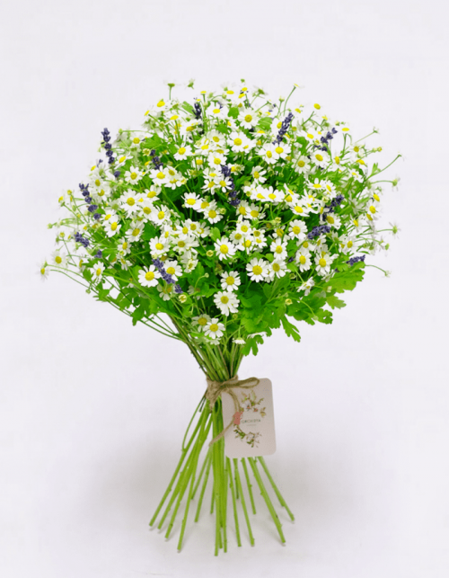 Get Your Chamomile at Precious Petals Flower Shop in Dublin